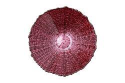 FOCUS KASE PEMBE 16.5x5.3cm(6348) - Thumbnail