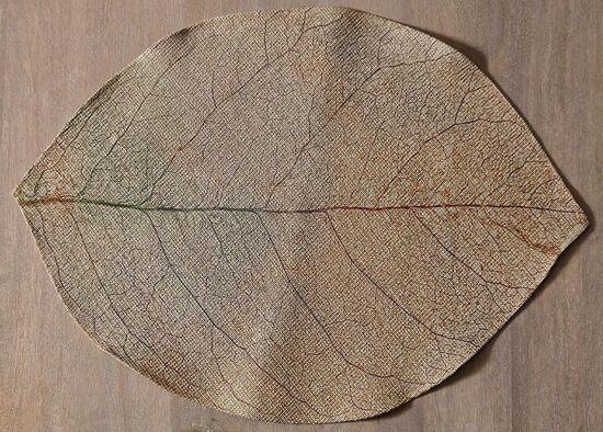 LEAFY DIJITAL SUPLA 35x50cm